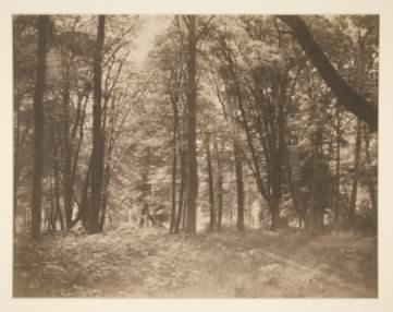 Gustave Le Gray, La forêt de Fontainebleau (The Forest at Fontainebleau)